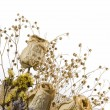 Bunch of Dried Flowers — Stock Photo #2197381