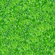 Stock Photo: Green grass seamless pattern.