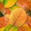 Fall leaf seamless background. — Stock Photo