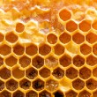 Honeycomb. — Stock Photo #1110298