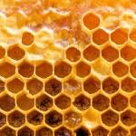 Honeycomb. — Stock Photo
