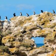 Stock Photo: Birds on rock.