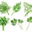 Parsley and dill. - 图库照片