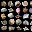 Shells. - Lizenzfreies Foto