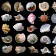 Shells. - Foto Stock