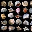 Shells. — Stockfoto