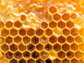 Honeycomb. — Stock Photo