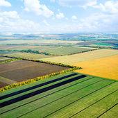 Fields. — Stock Photo
