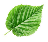 Green leaf. — Stock Photo