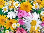 Flowers. — Stock Photo