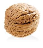 Vlašský ořech. — Stock fotografie