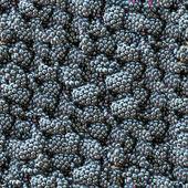 Blackberry seamless background. — Stock Photo