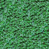 Leafs seamless background. — Stock Photo