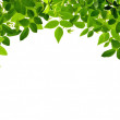 Green arch. — Stock Photo