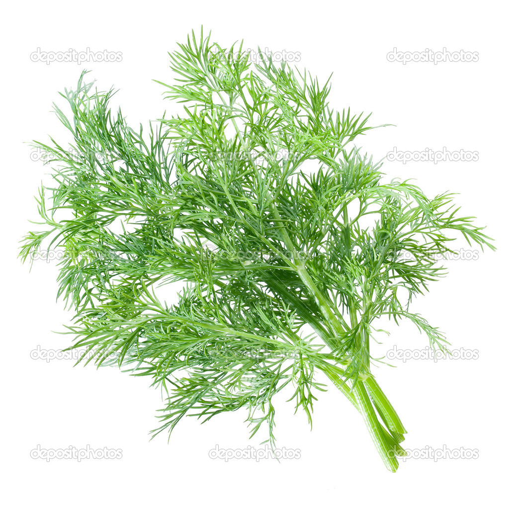 Dill bunch on white background (isolated). — Stock Photo #1183107