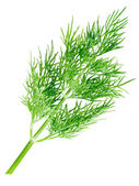 Dill on white background (isolated). — Stock Photo