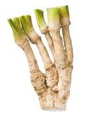 Horseradish. — Stock Photo