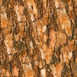 Royalty-Free Stock Photo: Pine bark seamless background.