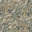Mold texture seamless background. - Stock Photo
