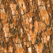 Pine bark seamless background. — Stock Photo