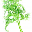 Royalty-Free Stock Photo: Dill.