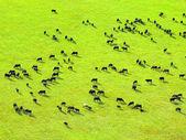 Cows herd. — Stock Photo