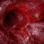 Blood vessel. — Stock Photo #2123456