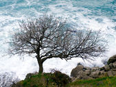 Tree on seashore. — Stock Photo