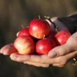 Stock Photo: Small tasty red apples