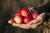 Small tasty red apples — Stock Photo