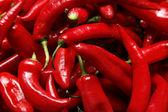 Peperoni di peperoncino rosso — Foto Stock