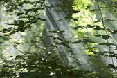 叶子 — 图库照片