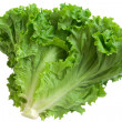 Crisp lettuce — Stock Photo