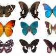 Some various butterflies — Stock Photo