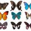 Some various butterflies - Stock Photo
