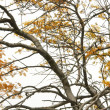 Isolated branch of tree — Stockfoto #1104843