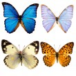 Some various butterflies isolated — Stock Photo #1114118