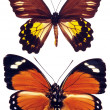 Some various butterflies isolated — Stock Photo #1114360