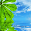Green leaf reflected in water — Stock Photo