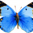 Butterfly  isolated on wihte — Stock Photo