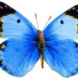 Stock Photo: Butterfly isolated on wihte