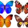 Some various butterflies isolated — Stock Photo #1125904