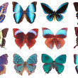 Some various butterflies isolated — Stock Photo #1126409