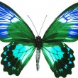 Royalty-Free Stock Photo: Butterfly isolated