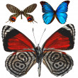 Butterflies isolated - Stock Photo