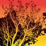 Siluette of tree — Stock Photo