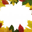 Autumn  leafs as frame — Stock Photo