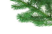 Christmas branch fir-tree — Stock Photo