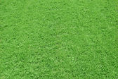 Field of grass as background — Stock Photo