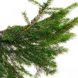 Christmas tree - Stock fotografie